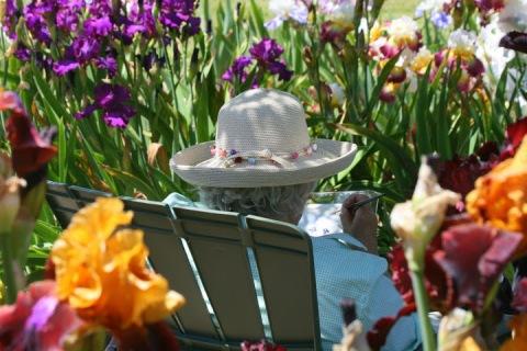 Painting in Kitty's iris garden