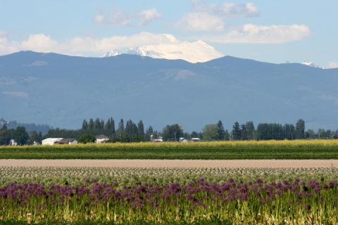 Snow-capped Mount Baker seen from the Skagit Valley