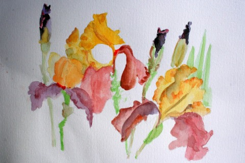 Another watercolor sketch of irises from Kitty's garden