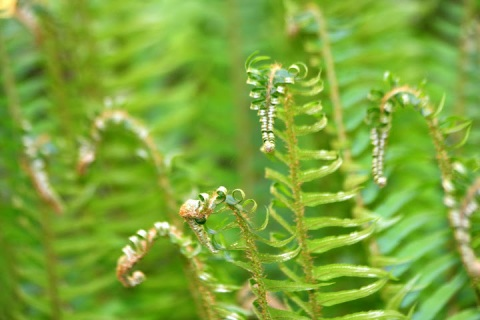 These ferns reminded me of sea horses