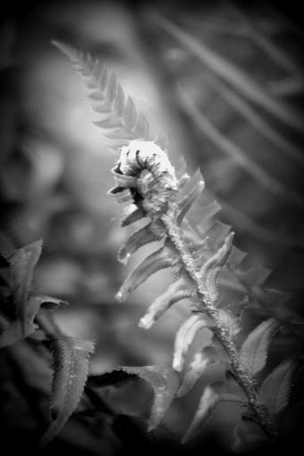 Ferns with Holga-ish effect