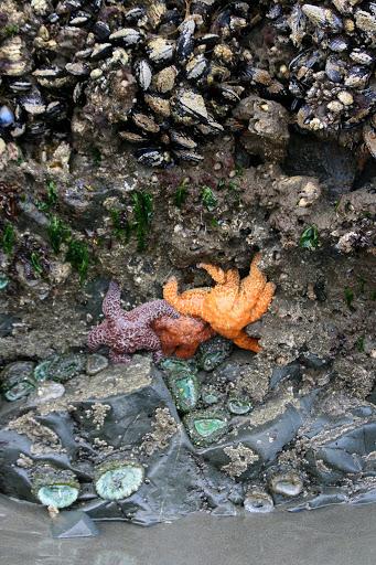 Brilliantly colored star fish