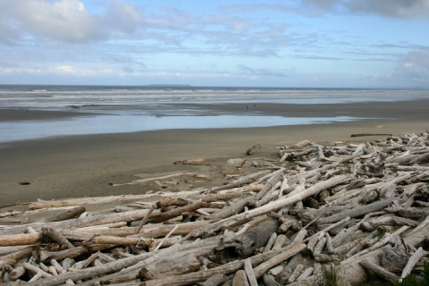 Piles of driftwood, Kalaloch Beach