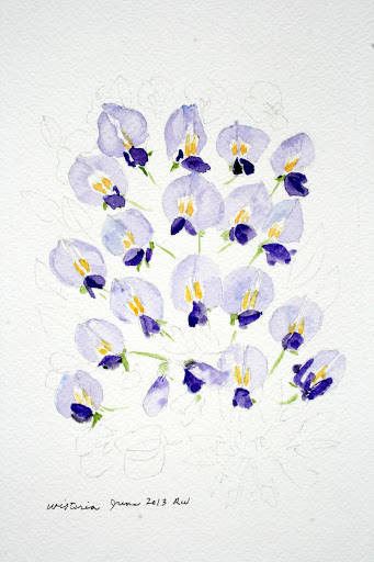 Watercolor sketch of wisteria