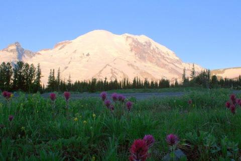 Mount Rainier with alpine flowers, Sunrise