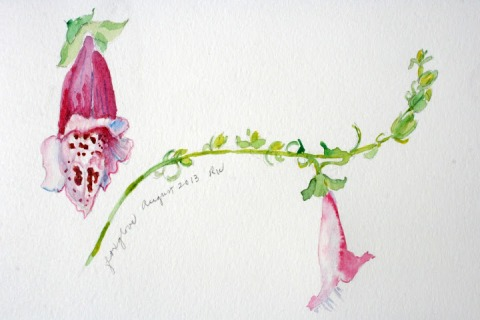Watercolor sketch of foxglove flowers