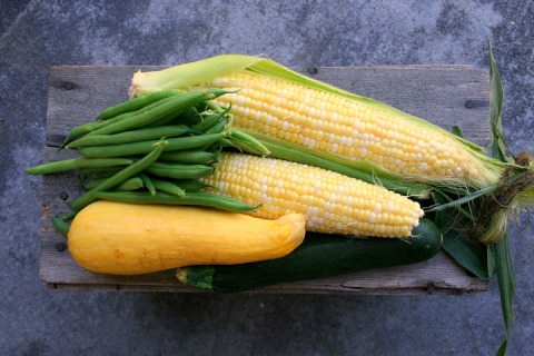The three sisters: corn, beans and squash