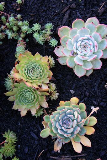 Succulents, rooftop garden