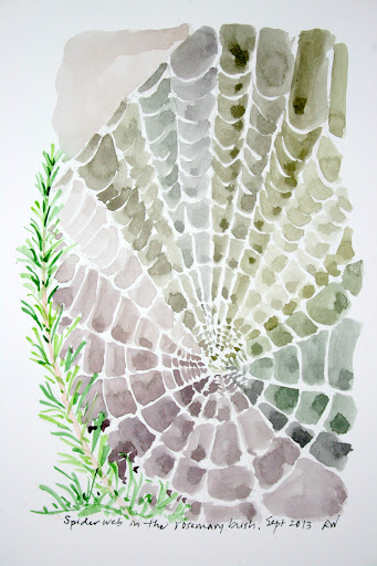 Watercolor sketch of spider web in a rosemary bush