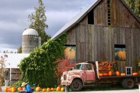 Weathered barn at Gordon Skagit Farms