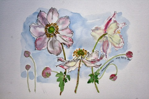 Second watercolor sketch of anemones
