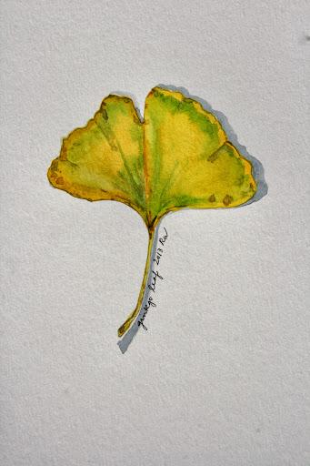 Watercolor sketch of ginkgo leaf