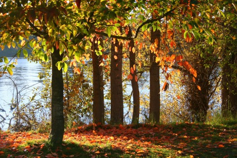 Fall color on the shores of Green Lake