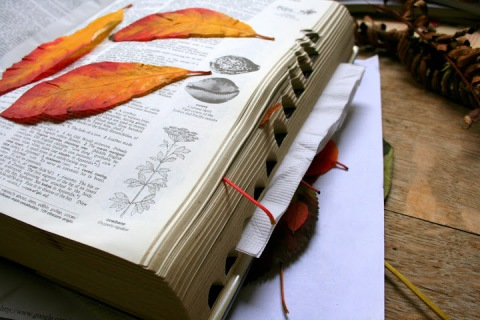 My 40-year-old dictionary has been getting a real workout pressing leaves this fall.