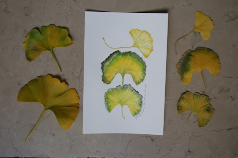 My watercolor sketch of gingko leaves from the trees in the East Village