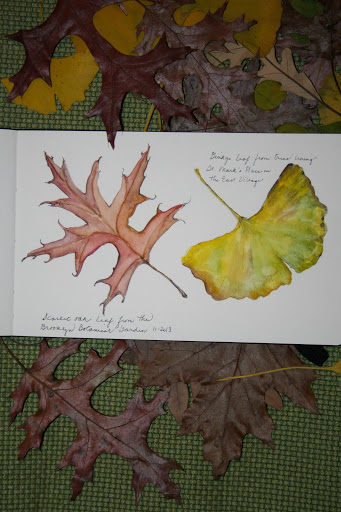 Watercolor sketch of scarlet oak and ginkgo leaves