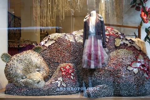 Anthropology window