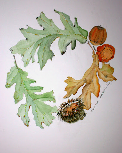 Watercolor sketch of bur oak leaves and acorns