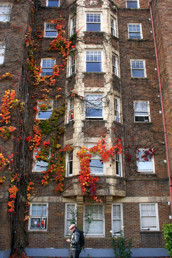 Vine-covered apartments