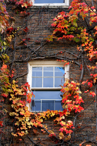 Vines and apartment window