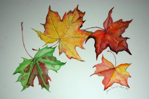 Watercolor sketch of fallen maple leaves