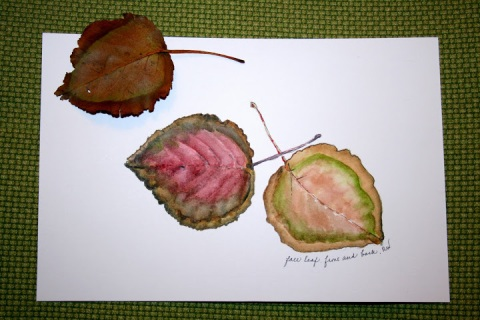 Watercolor sketch of front and back of fallen leaf