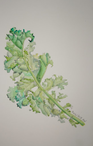 Watercolor sketch of kale leaf
