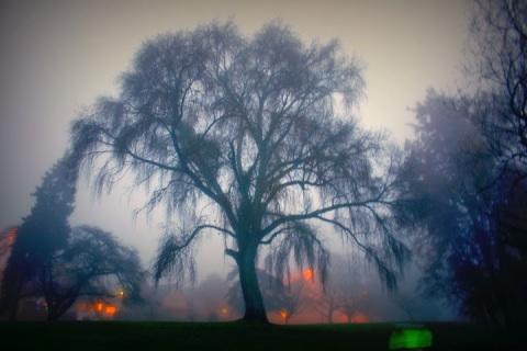 Foggy morning at Green Lake