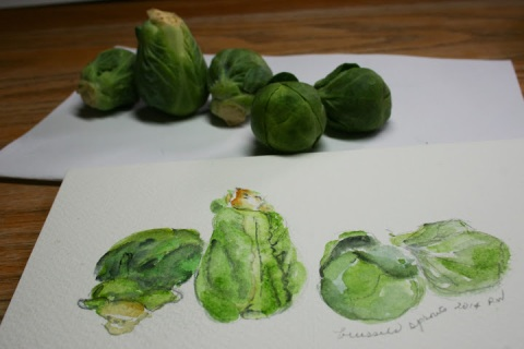 Watercolor sketch of Brussels sprouts