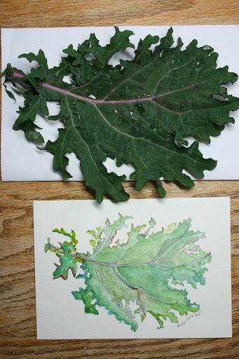 Watercolor sketch of kale leaf