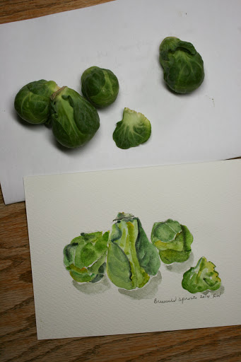 Another watercolor sketch of Brussels sprouts