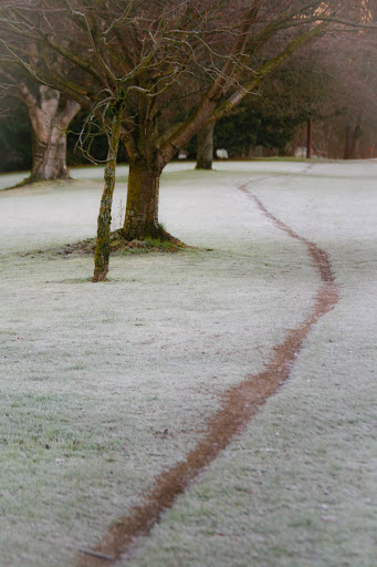 Path through the frosty grass, Green Lake