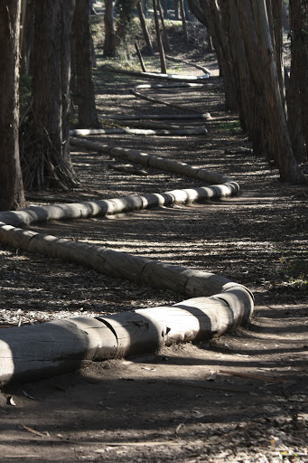 Andy Goldsworthy's Wood Line