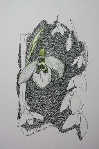 Ink sketch of snowdrops