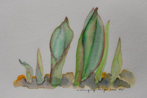 Watercolor sketch of emerging tulips