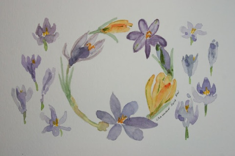 Watecolor sketch of crocuses