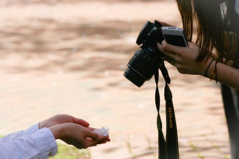 Photographing a fallen blossom
