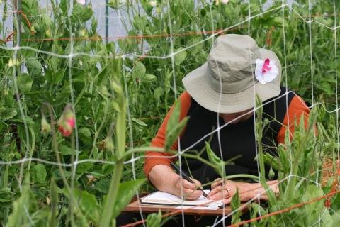 Bonnie making art amidst the sweet peas