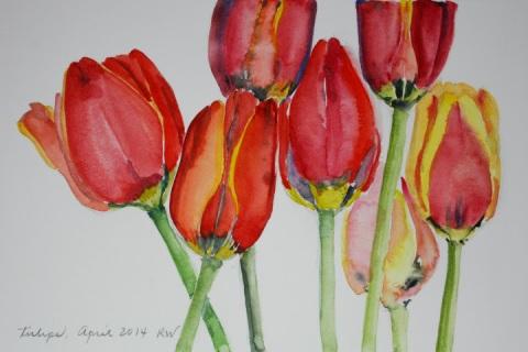Watercolor sketch of tulips