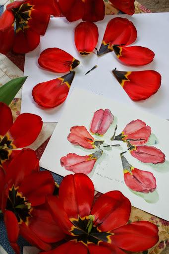 Watercolor sketch of tulip petals