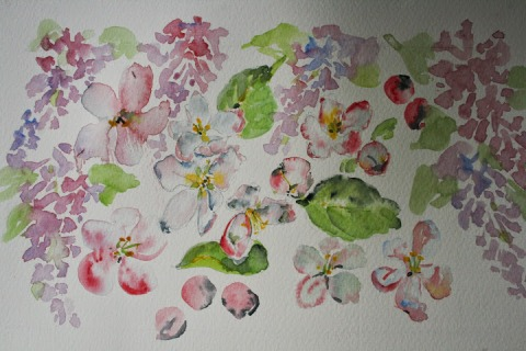 Watercolor sketch of lilacs and apple blossoms