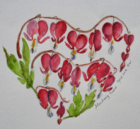 Watercolor sketch of bleeding hearts