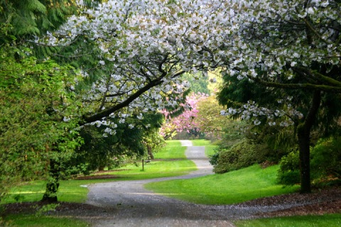 Path through Washington Park Arboretum, Seattle