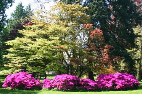 Seattle's Volunteer Park in May