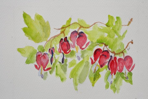 Another watercolor sketch of bleeding hearts