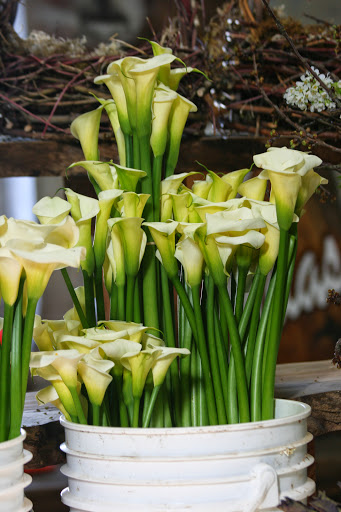 Calla lilies from Z Callas