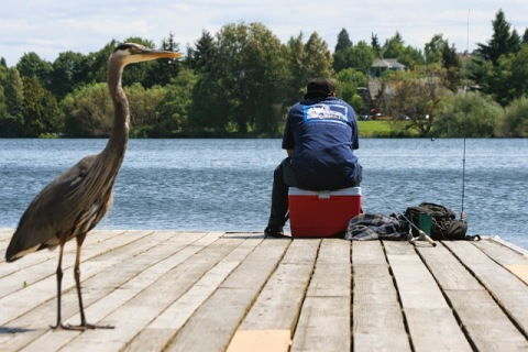 Fisherman at Green Lake with great blue heron