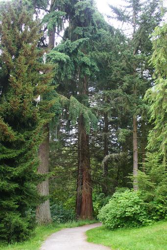 Path in Washington Park Arboretum