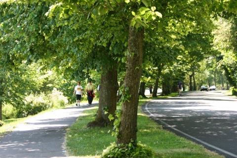 Walking along Lake Washington Blvd, Seattle