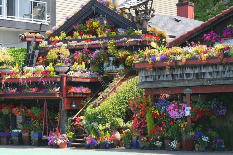 Flowered house on Alki Avenue